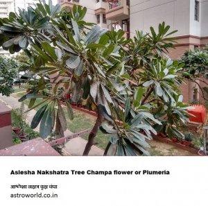 Ashlesha Nakshatra tree